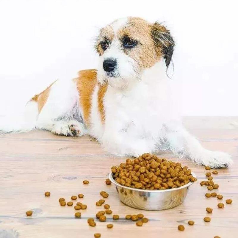 狗粮选择要注意,DHA狗粮让狗狗健康成长