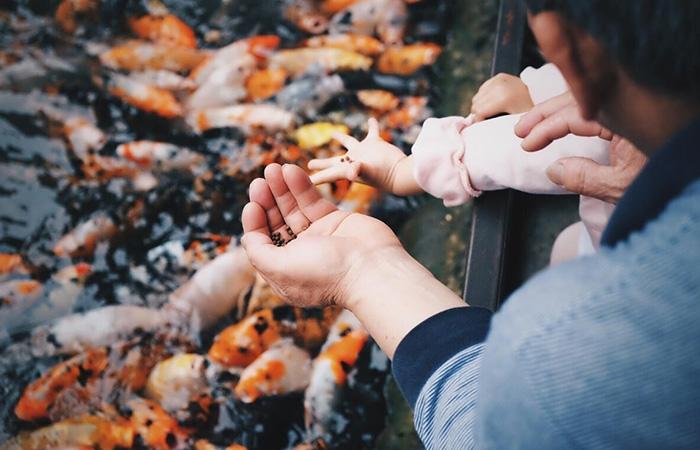 裂壶藻粉功能多样可用于宠物食品、禽畜饲料、水产饲料